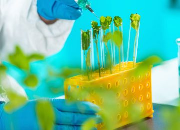 biologist-examining-plant-seedling-DL9VJAP